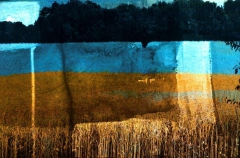 Blue Fields at Dawn, Digital print on paper or canvas