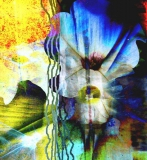 Morning Glory, Digital Print on paper or canvas